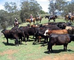 Pasture_in_Australia